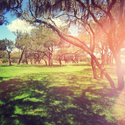 Beautiful Outdoor Park with Rays of Light