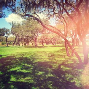 Beautiful Outdoor Park with Rays of Light by melking