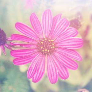 Beautiful Pink Flower by melking