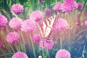 Purple Clives with Butterfly by melking