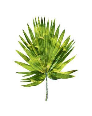 Palm IV by Melonie Miller