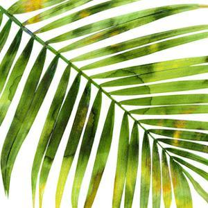 Tropical Palm I by Melonie Miller
