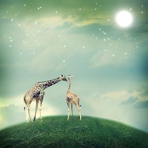 Giraffes In Friendship Or Love Concept Image by Melpomene