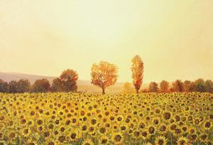 Memories Of The Summer