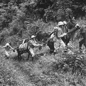Men and Pack Animals Climbing a Steep Hill
