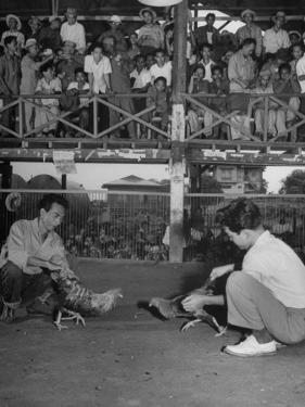 Men and their Birds Participating in Cock Fighting