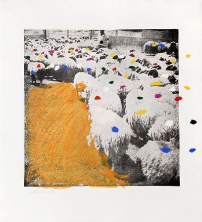 Sheep Portfolio 6