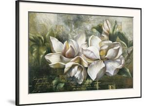 Dawning Magnolias by Meng