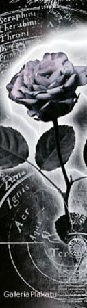 Mercury Rose Art Print Poster