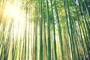 Tall Bamboo Forest by Meredith Winn Photography