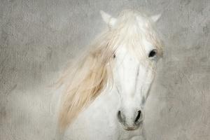 Stallion Face by Merrie Asimow