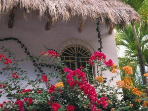 Bougenvilla Blooms Underneath a Thatch Roof, Puerto Vallarta, Mexico by Merrill Images