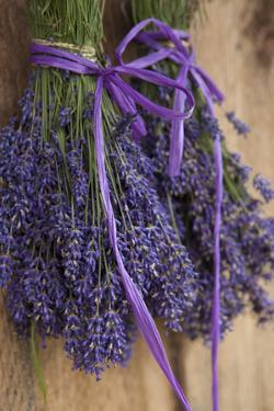 Bunches of Lavender Drying Shed at Lavender Festival, Sequim, Washington, USA by Merrill Images