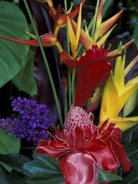 Colorful Tropical Flowers, Hawaii, USA by Merrill Images