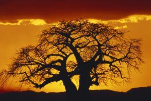 Silhouette Image of Tree at Sunset by Merrill Images