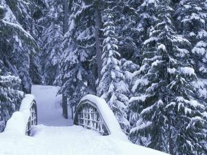 Snow-Covered Bridge and Fir Trees, Washington, USA by Merrill Images
