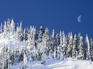 Usa, Washington State, Crystal Mountain. Snow covered trees and moon in blue sky. by Merrill Images