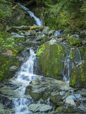 Usa, Washington State, Crystal Mountain. Waterfall at Elizabeth Creek with moss on boulders. by Merrill Images