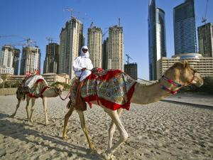 Camels on Beach with High-Rises in Background by Merten Snijders