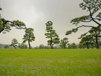 Kokyo-Gaien (Imperial Palace Gardens) Park, Covered with Pine Trees