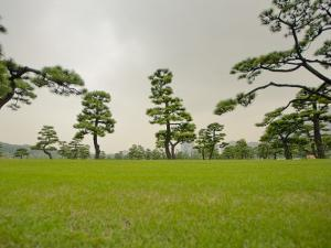 Kokyo-Gaien (Imperial Palace Gardens) Park, Covered with Pine Trees by Merten Snijders