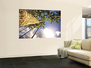 Palm Trees from Below by Merten Snijders