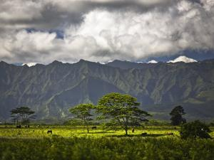 Peaceful Horse Range Setting on the Road to Wailua Falls, with Kauai Mountains in Background by Merten Snijders
