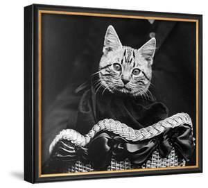 French Tabby Cat by Mesh Gabriella