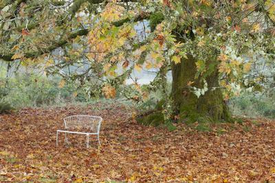 https://imgc.allpostersimages.com/img/posters/metal-bench-under-maple-tree-quinault-washington-usa_u-L-PN73H60.jpg?p=0