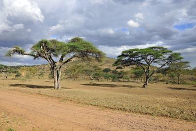 African Landscape by meunierd