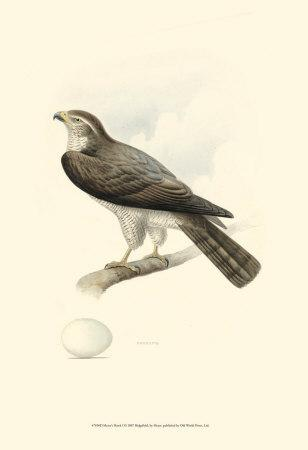 Meyer's Hawk I