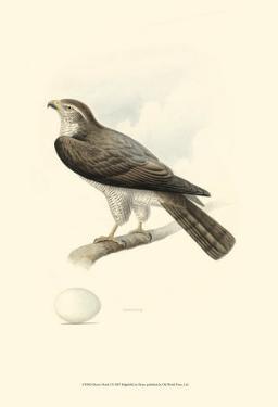 Meyer's Hawk I by Meyer