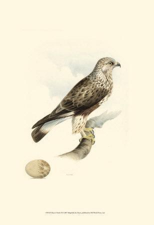 Meyer's Hawk II