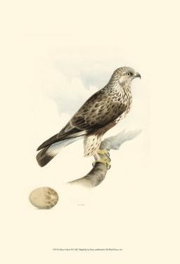 Meyer's Hawk II by Meyer