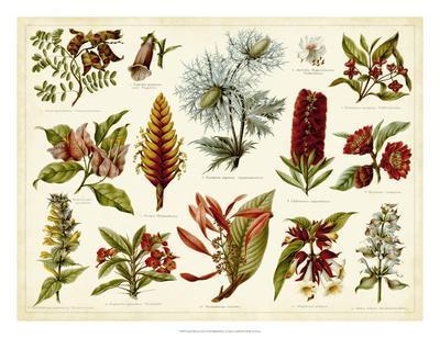Tropical Botany Chart I