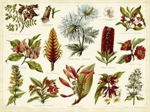 Tropical Botany Chart I by Meyers