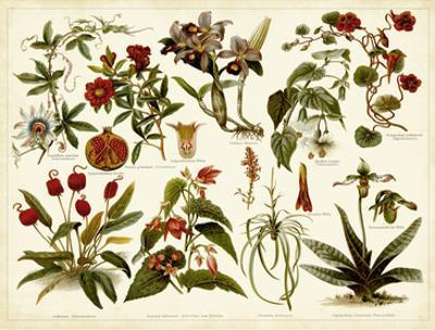 Tropical Botany Chart II by Meyers