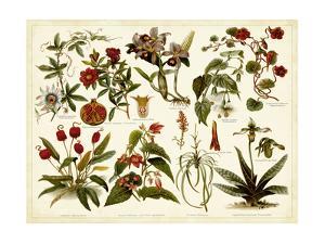 Tropical Botany Chart II by Meyers