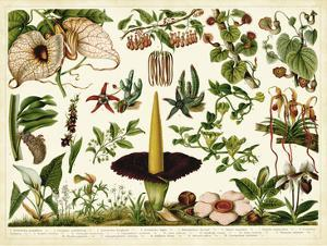 Tropical Botany Chart III by Meyers