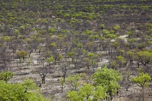 Namibia Forest by mezzotint