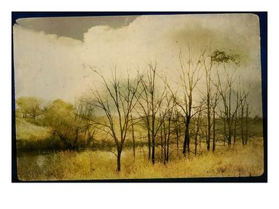 A Country Scene with Small Trees