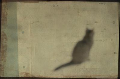 Blurred Cat Sitting by Mia Friedrich