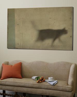 Blurred Cat Walking by Mia Friedrich