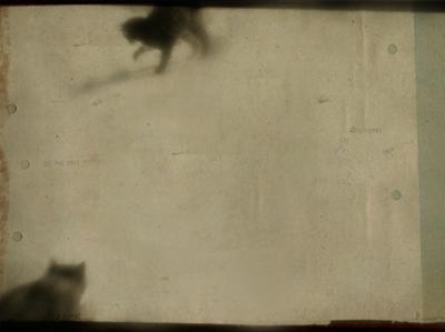 Blurred Cats by Mia Friedrich