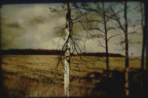 Broken Branches on Tree by Mia Friedrich