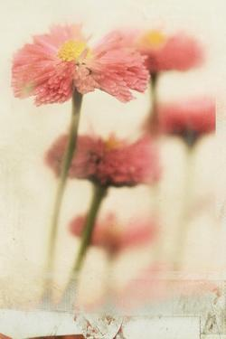 Close Up of Flowers by Mia Friedrich