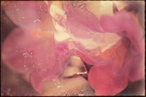 Conceptual Floral Images by Mia Friedrich