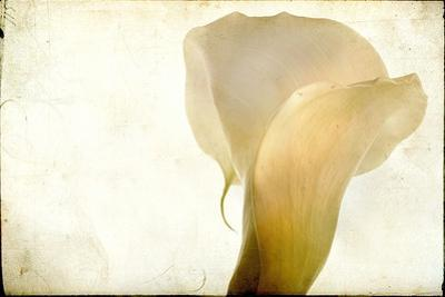 Detail of Calla Lily by Mia Friedrich