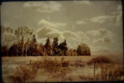 Fenced Field with Trees and Grass by Mia Friedrich