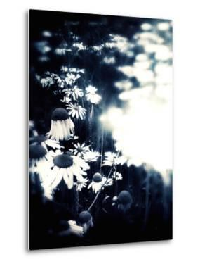 Flowers in Summertime by Mia Friedrich